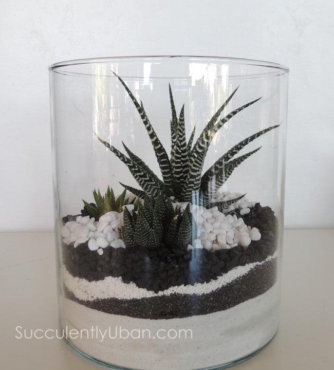 succulent-terrarium_3323 - Succulent Terrarium- Black And White (San Diego Delivery Only