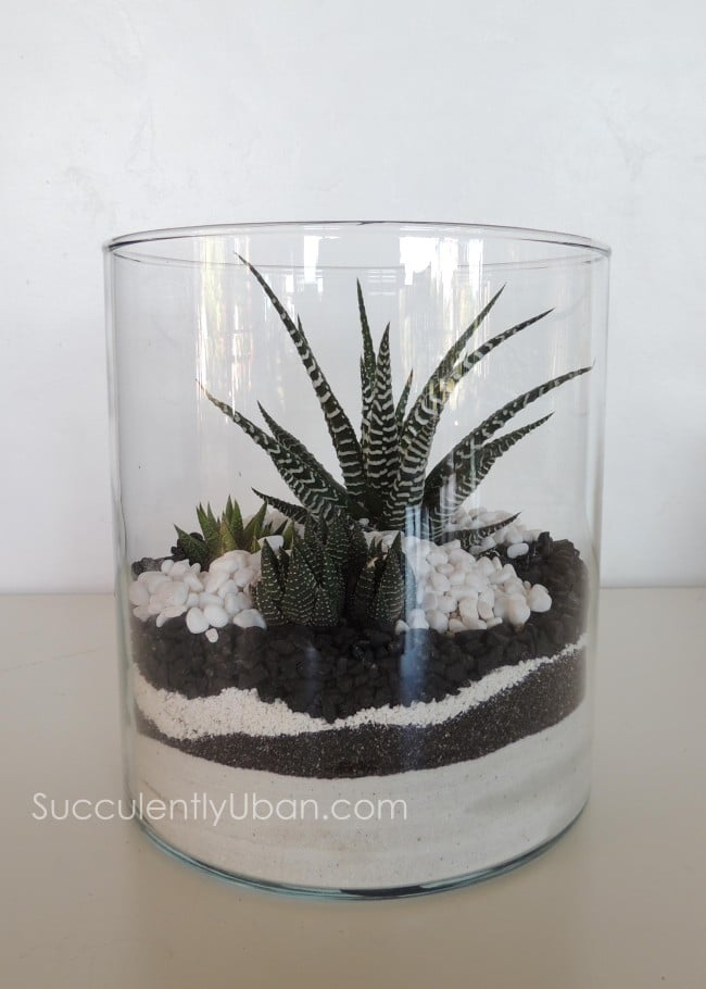 Cylinder Succulent Terrarium San Diego Delivery Only
