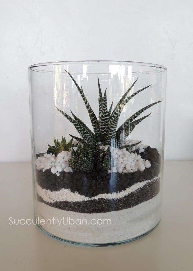 Succulent Terrarium Black And White San Diego Delivery