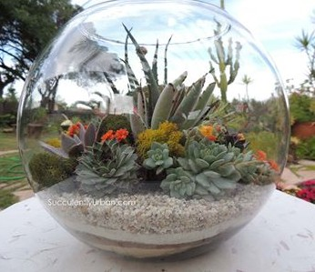 Bubble Succulent Terrarium-Large