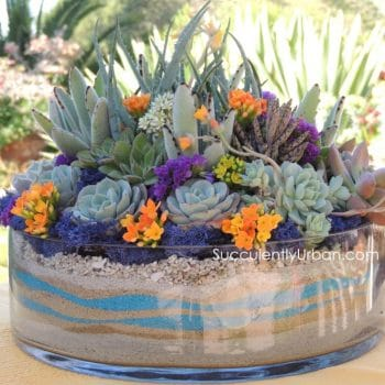 Succulent Arrangement Glass Dish (San Diego Only)
