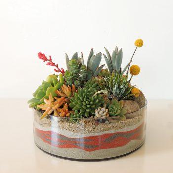 Succulent Arrangement Glass Dish