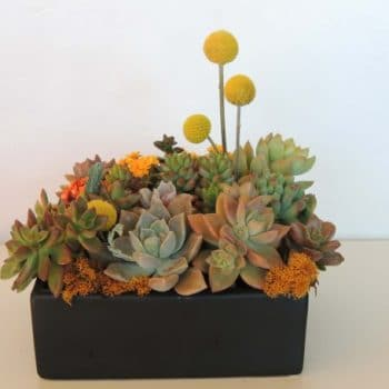 succulent-arrangement_3672