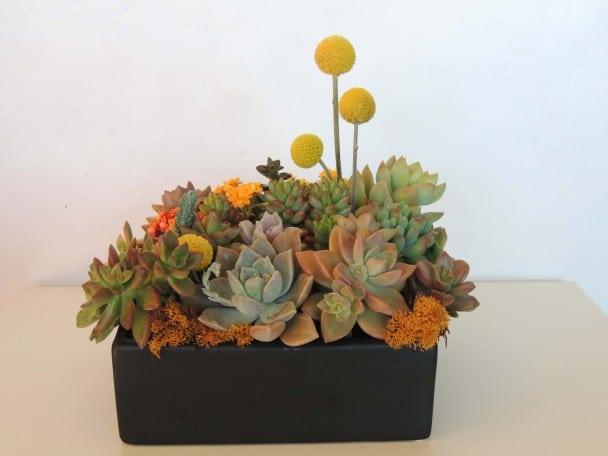 Succulent Arrangements Design Decoration