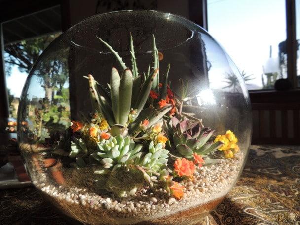 Image result for succulent terrarium images