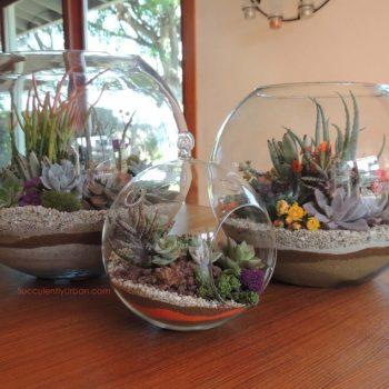 """Succulent Terrarium 10"""""""