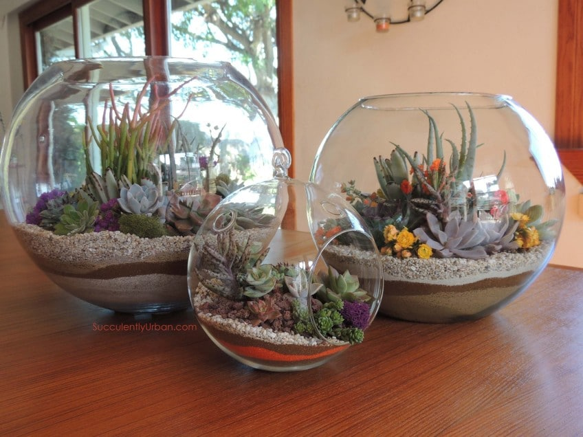 succulent terrarium 10 san diego only urban succulents. Black Bedroom Furniture Sets. Home Design Ideas