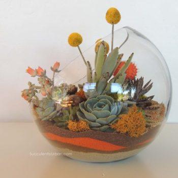Succulent Terrarium Half Moon (San Diego Only)