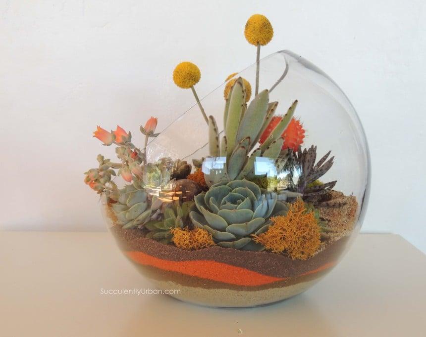 succulent-terrarium_0097 - Succulent Terrarium Half Moon (San Diego Only) Urban Succulents