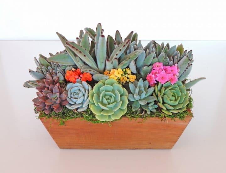 Kalonchoe tomentosa arrangement