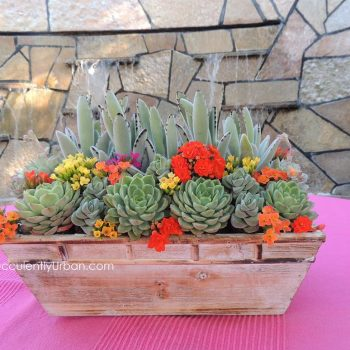 succulent-centerpiece-wood_box