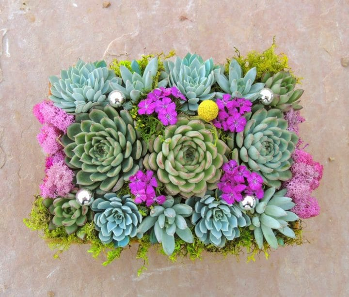 Succulentarrangement with semper vivums.