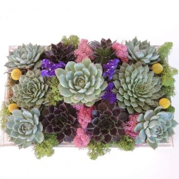 Succulent Arrangement with Sempervivum Succulents - Includes Shipping