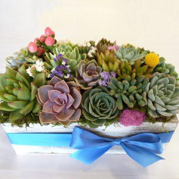 Succulent Centerpiece Wood Box (Copy)
