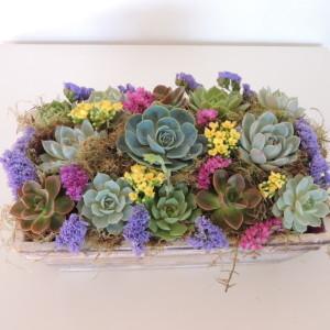 succulent-arrang_819