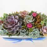 with succulent arrangement in rectangular box