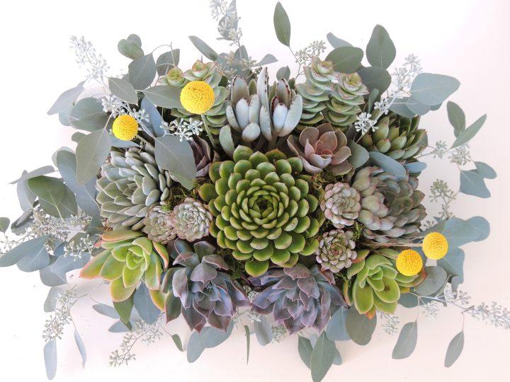 succulent arrangement barbara