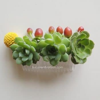Succulents and berries