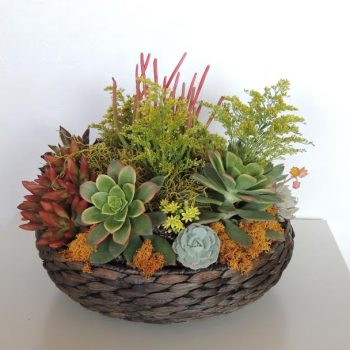 succulents13-inch_basket
