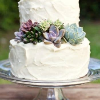 wedding cake succulents succulent cake topper products succulents 25813