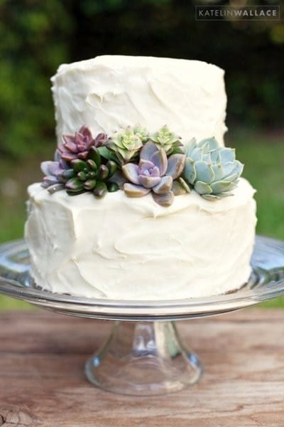 wedding cake decorated with succulents succulent cuttings for cake decorating succulents 22367