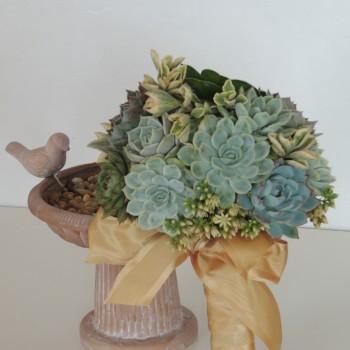 Succulent-arrang 1194