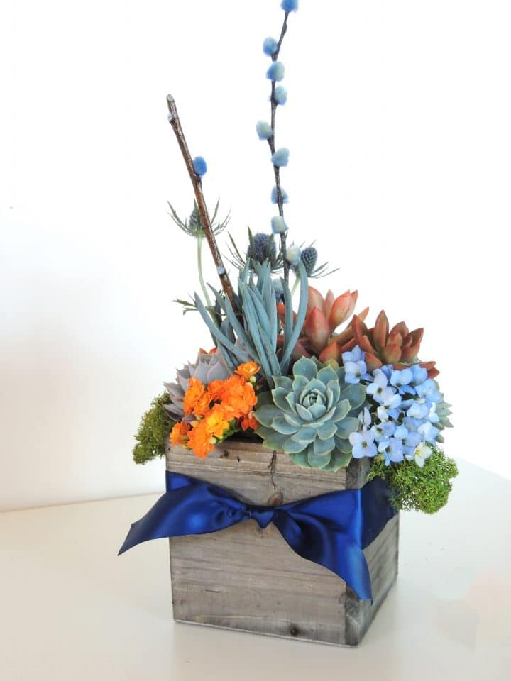 Orange and navy blue succulent arrangement