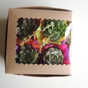 Succulent-gift_03
