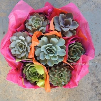 Amee's collection of 20 succulent gifts