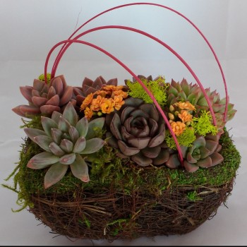 basket-of-succulents_120914141
