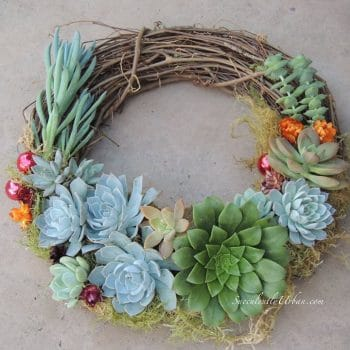 succulent-christmas wreath
