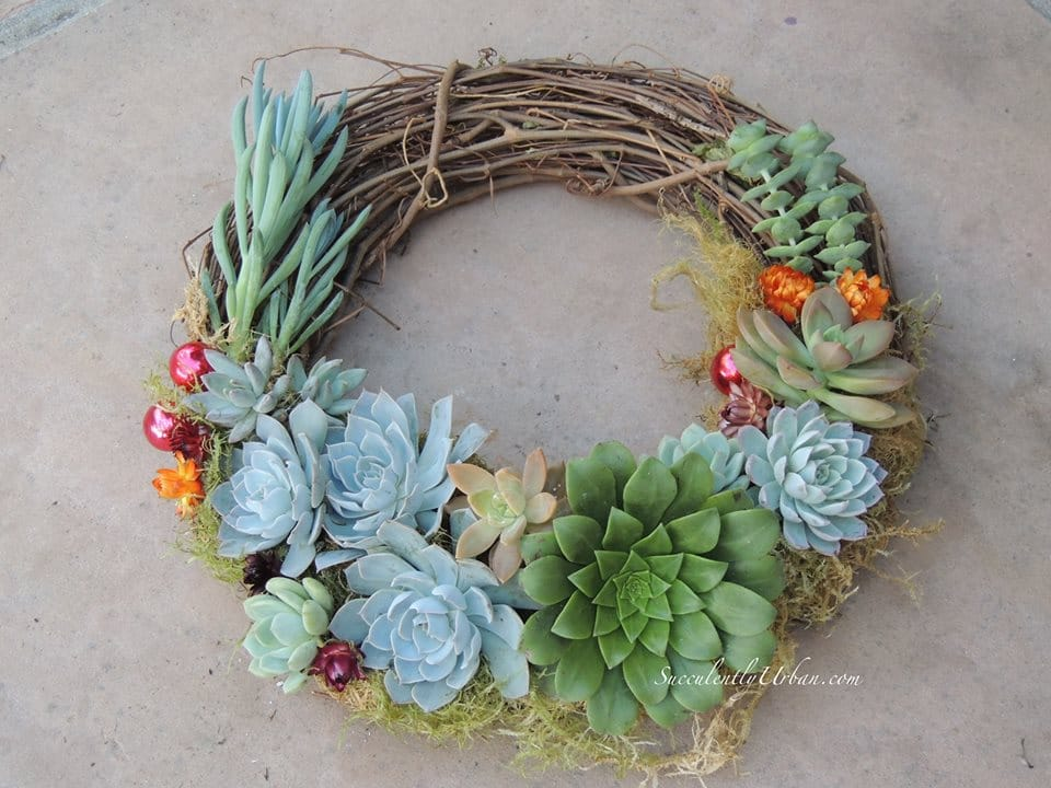 Christmas Succulent Wreath