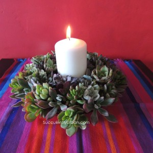 succulent-weath-8435
