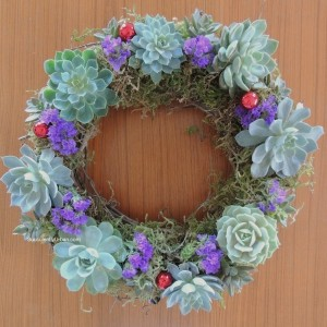 succulent-wreath 709