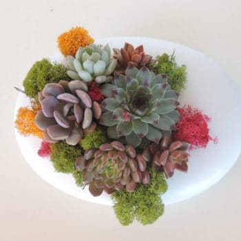 Oval Arrangement