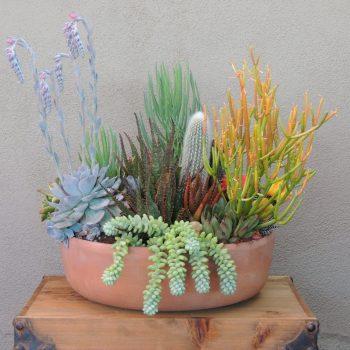 Succulent Arrangement-Sticks on Fire or Euphorbia Tirucalli