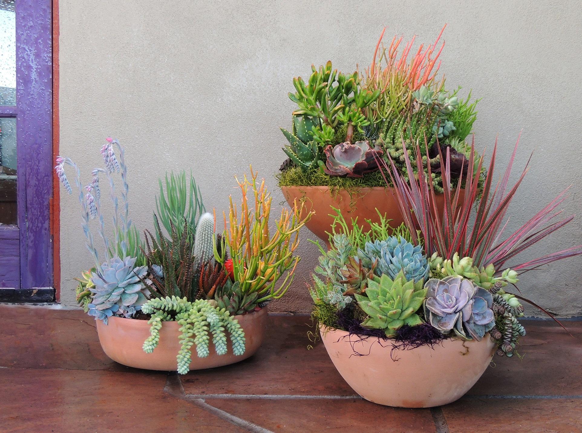 Succulent Garden In Terracotta Pot For Patio Urban Succulents