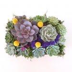 succulent-arrangement-perle von nurnberg