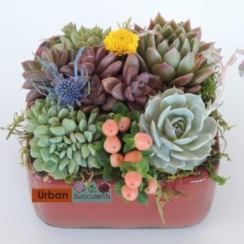 succulent-gift_3956
