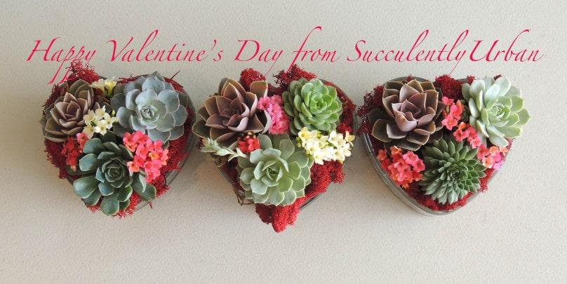 succulent-valentine_0169b2