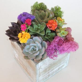 Succulent arrangements in 5x5 box