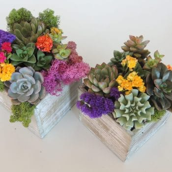 Set of two Wood box succulent arrangements - for Matt