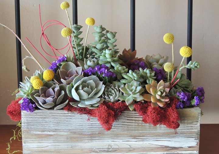 Succulent wedding bouquets centerpieces more urban succulents succulent centerpieces san diego junglespirit Choice Image