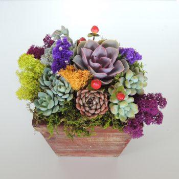 succulent-gitf_3662