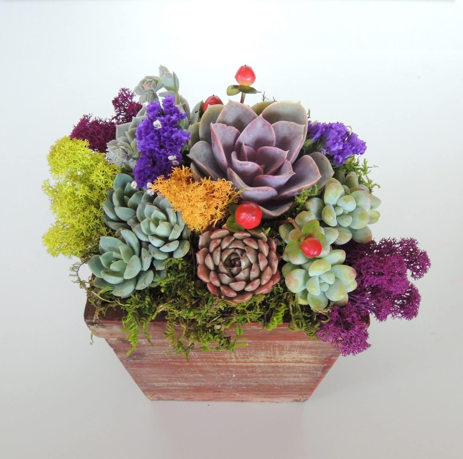 Succulent arrangements 6 x 6 urban succulents for Indoor plant gift ideas