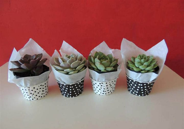 Succulent Wedding Bouquets Centerpieces Amp More Urban