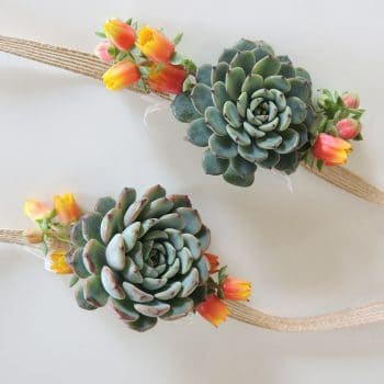 Succulent Corsage Ashley