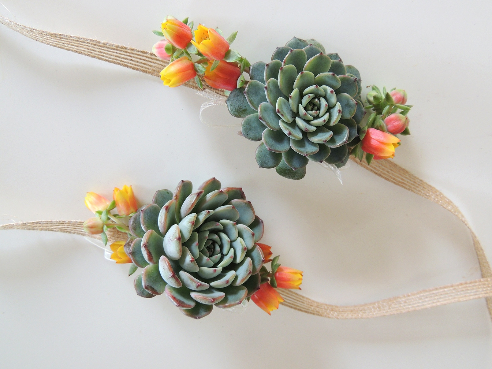 Succulent Corsage Ashley | Urban Succulents