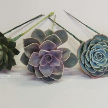 Hand Wired Succulents for DIY Bouquets