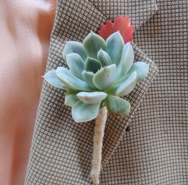 set of five boutonnieres  urban succulents, Beautiful flower